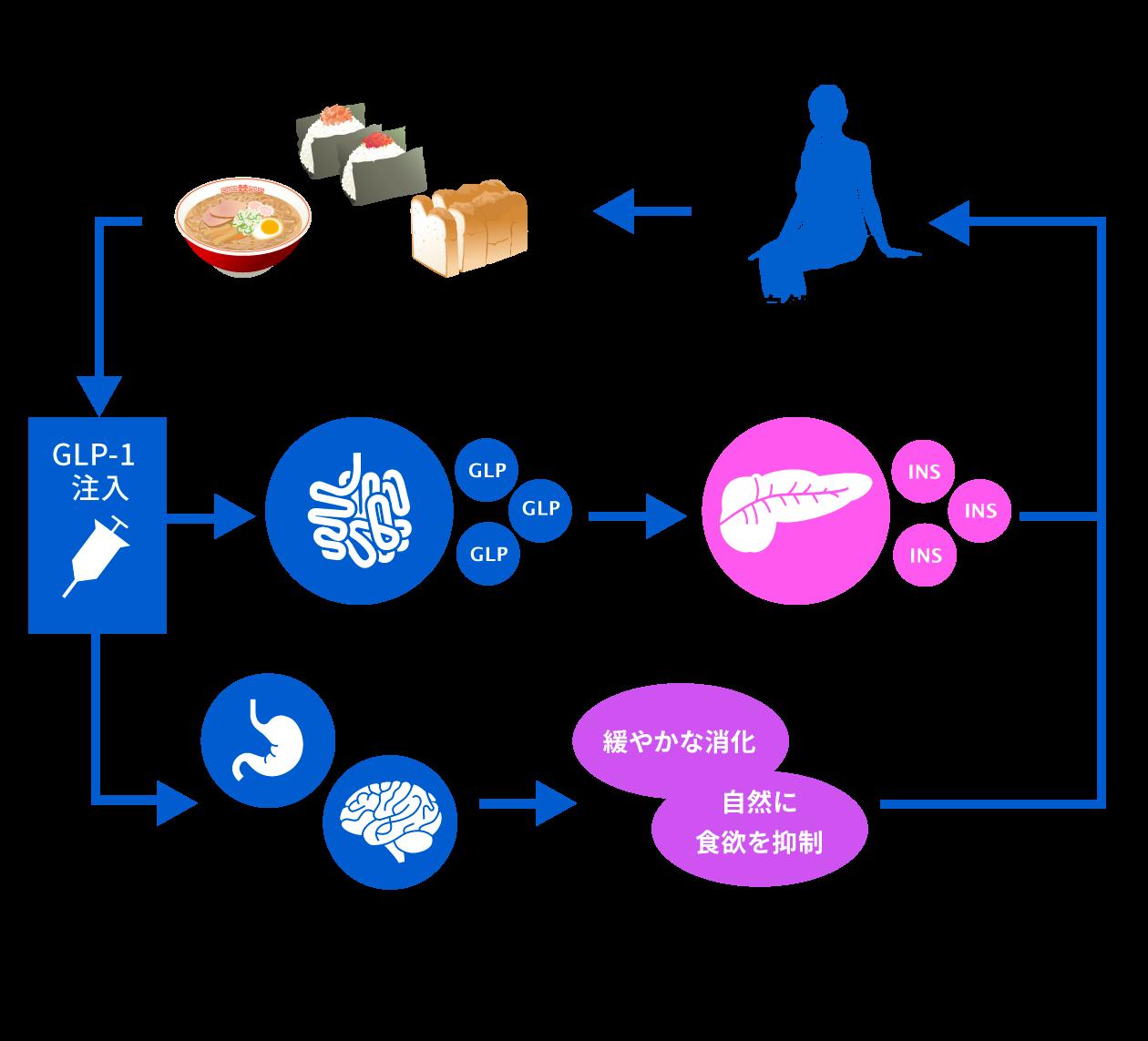 GLP-1ダイエットのメカニズム