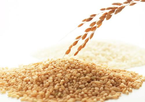 玄米プロテイン